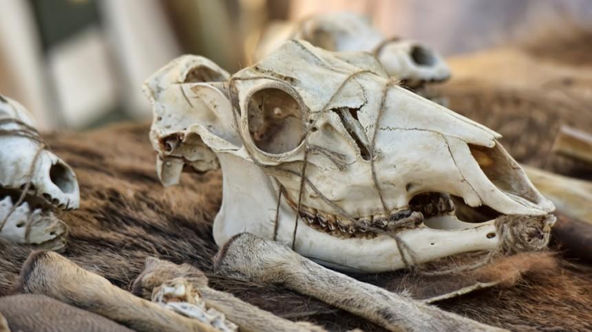 Украденные измузея черепа плотник продавал насайте объявлений «закопейки»