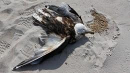 Начерноморском побережье зафиксирована массовая гибель птиц идельфинов