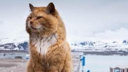 «Пушистый нелегал»: умер легендарный кот Кеша соШпицбергена