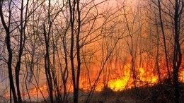 Штрафы залесные пожары предложили увеличить вдесять раз