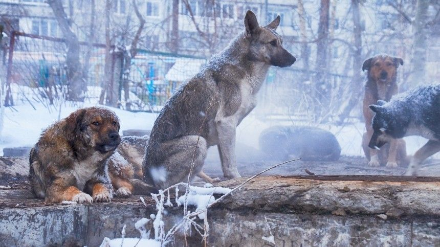 Неостались встороне: полицейские Югры закупили корм для бездомных животных