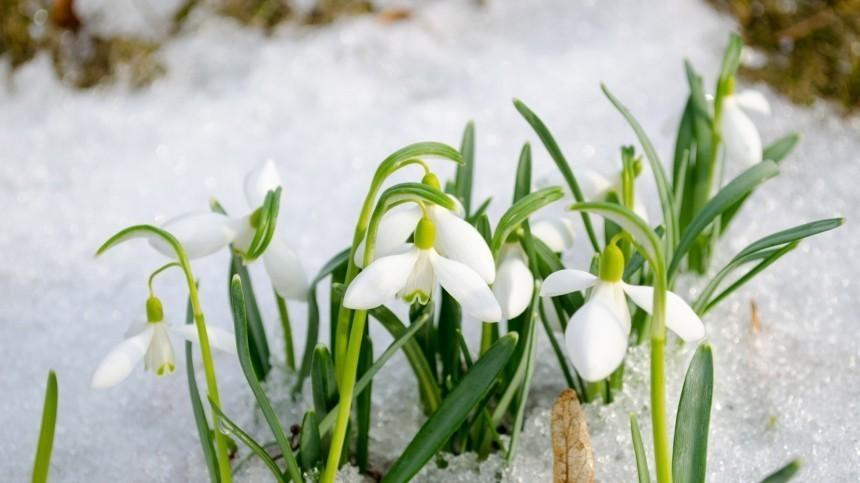 Аналитики назвали дату прихода весны вразные регионы России