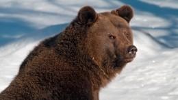 Весне дорогу: Медведь Балу вышел изспячки внижегородском зоопарке