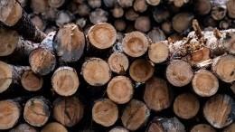 ВХакасии возбудили дело вотношении членов ОПГ, занимавшейся незаконной вырубкой леса