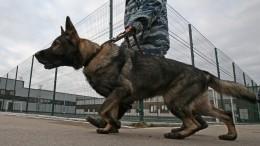 Петербургские кинологи тренируют собак находить расчлененные тела