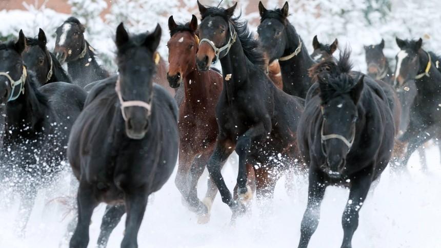 Лесничий задержан поподозрению врасстреле табуна лошадей вИркутской области