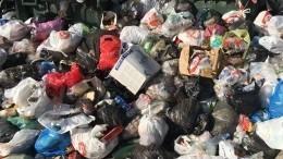 Жуткое «кладбище» птиц перепугало жителей Курска