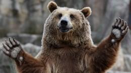 Поулицам медведи ходят. Как работает вРФновый закон обобращении сживотными?