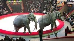 Видео: Повалившийся натрибуны слон вызвал панику зрителей вказанском цирке
