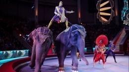 «Уних матриархат»: дрессировщик объяснил, почему подрались слоны вКазани