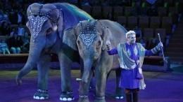 Пользователи потребовали запретить шоу сживотными после битвы слонов вцирке