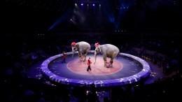 «Тыхотела шоу?!»— почему подрались слонихи вцирке Казани