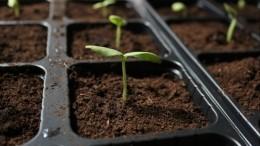 Грунт измагазинов может оставить дачников без урожая— результаты исследования