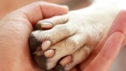 Видео: собаку сострелой вшее спасли вТатарстане