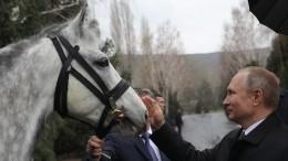 «Сделал кульбит»: Путин рассказал, как учился верховой езде