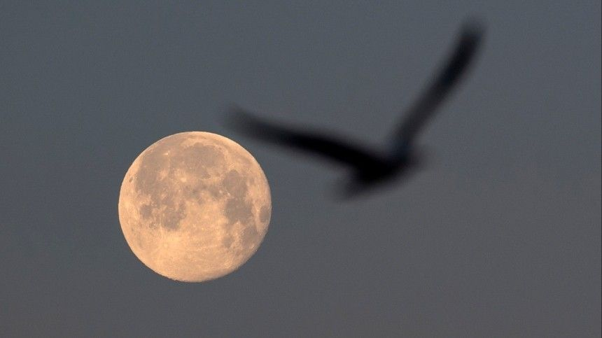 Что сулит Сахарная Луна представителям разных знаков зодиака