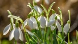 Весна пришла: какая погода ожидается вапреле вМоскве иПетербурге