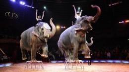 Иснова цирк, Казань, слоны: смотритель госпитализирован после нападения