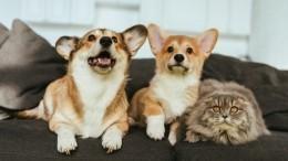 Как определить симптомы коронавируса укота или собаки?