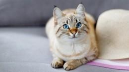 Госдума рассмотрит законопроект орегистрации домашних животных