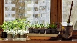 Пандемия COVID-19 спровоцировала рост числа «огородников» вРоссии