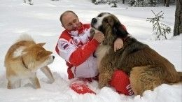 Собаки или кошки: Песков рассказал одомашних животных Путина