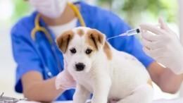 Россия зарегистрировала первую вмире вакцину отCOVID-19 для животных