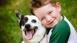 Сказать «да»? Детский психолог ореакции напросьбу ребенка завести щенка