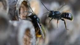 Рой издесятка тысяч пчел атаковал автомобиль водителя вСША— видео