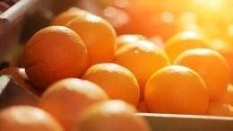 Сирийские апельсины скоро появятся нароссийских прилавках