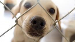 ВГосдуме занялись спасением приюта для животных «Счастливый друг»