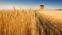 Эксперты предупредили Россию онависшей угрозе дефицита продовольствия