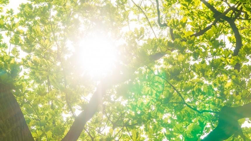 ВГидрометцентре предупредили об«опасном солнце» вмае