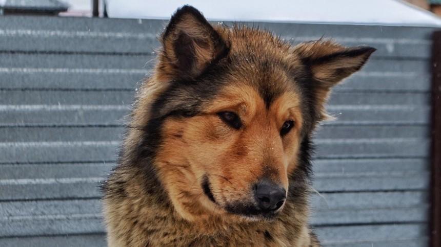 Собаки погибли при взрыве газового баллона вчастном приюте вКемерово— фото
