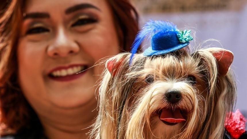 Исследования: вовремя пандемии люди растолстели истали вкуснее кормить собак