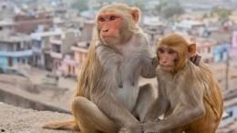 Стартап Илона Маска научил обезьяну играть ввидеоигры силой мысли— видео