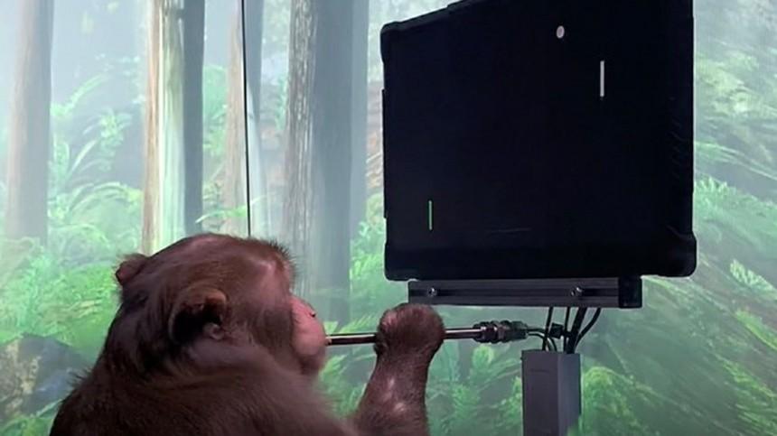Украинский киберспортсмен вызвал чипированную обезьяну Маска сыграть вDota