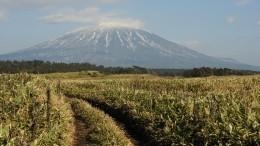Японцы оценили фильм с«неудобной правдой» обострове Кунашир