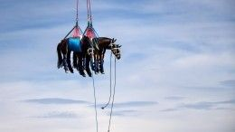Фото недели: Скандал сКриштиану Роналду, лошади внебе иДень космонавтики