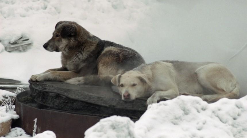 Представляют опасность? Сколько бездомных собак живет вроссийских регионах