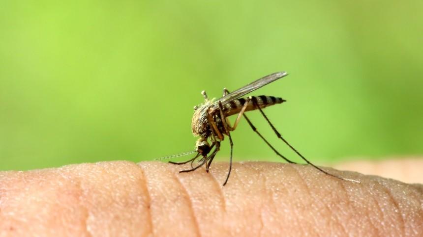 Врачи назвали самую «вкусную» для комаров группу крови
