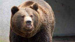Бурый медведь неожиданно появился около дверей школы наСахалине