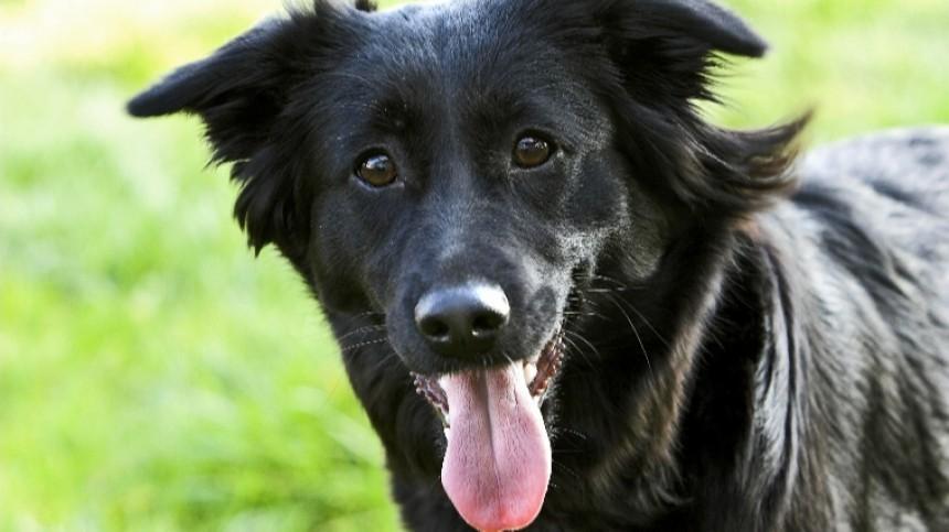 Угадайте породу собаки пофото— тест