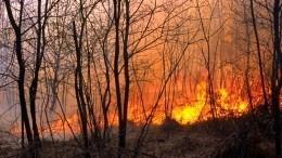 Видео: Стена огня подошла кдетскому саду вТульской области