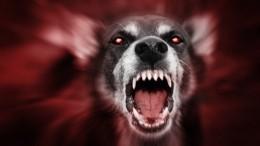 Видео сместа, где собаки загрызли ребенка вселе Башкирии