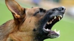 «Уха небыло, носа небыло»: местная жительница орастерзанном собаками мальчике