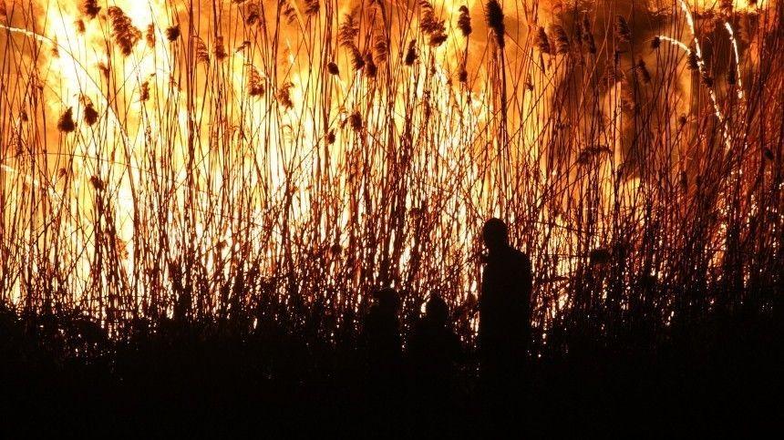 Особый противопожарный режим: пал сухой травы угрожает городам идеревням вРФ