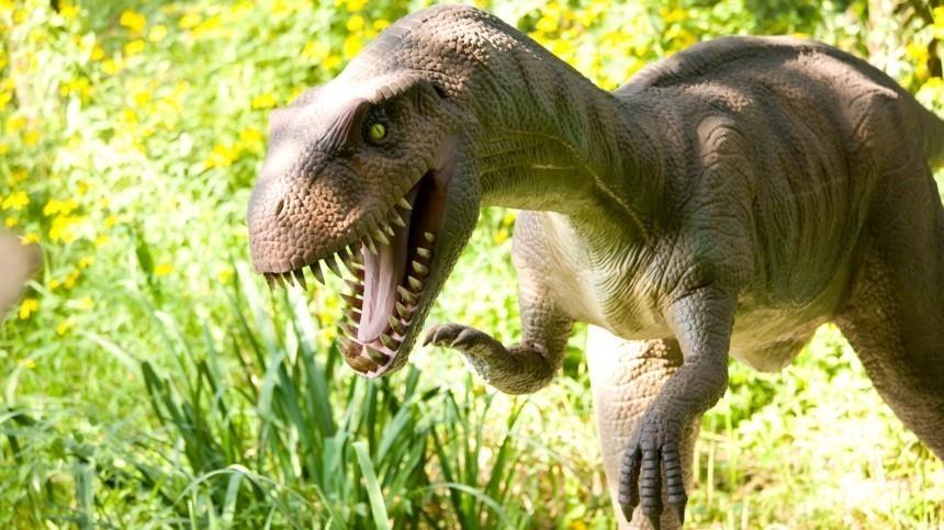 Парк Юрского периода: вСША камеры видеонаблюдения засняли живого «динозавра»