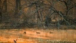 Ярко-желтая река перепугала жителей вПриморье