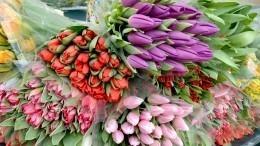 Более 80 тысяч тюльпанов представлено наежегодной выставке вКрыму